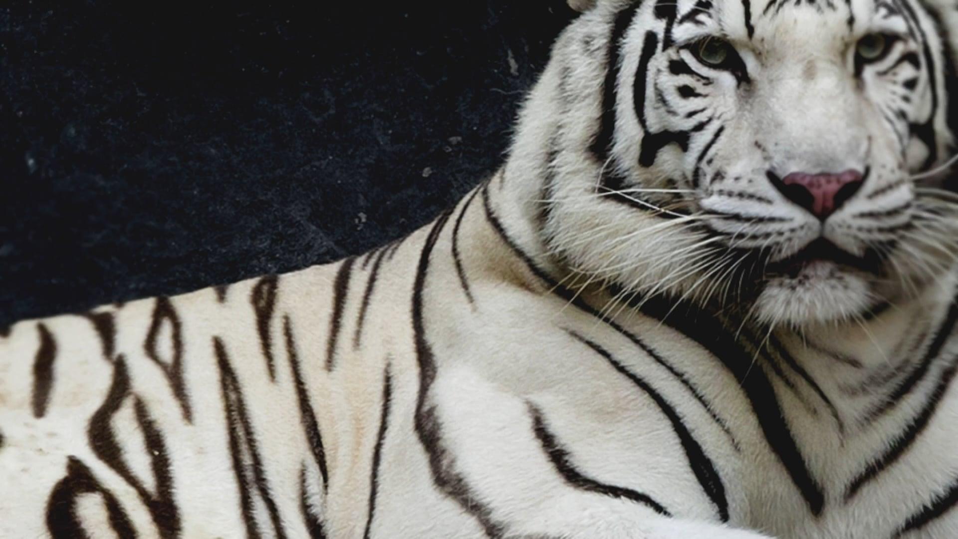 ANIMAL PLANET – FILLER